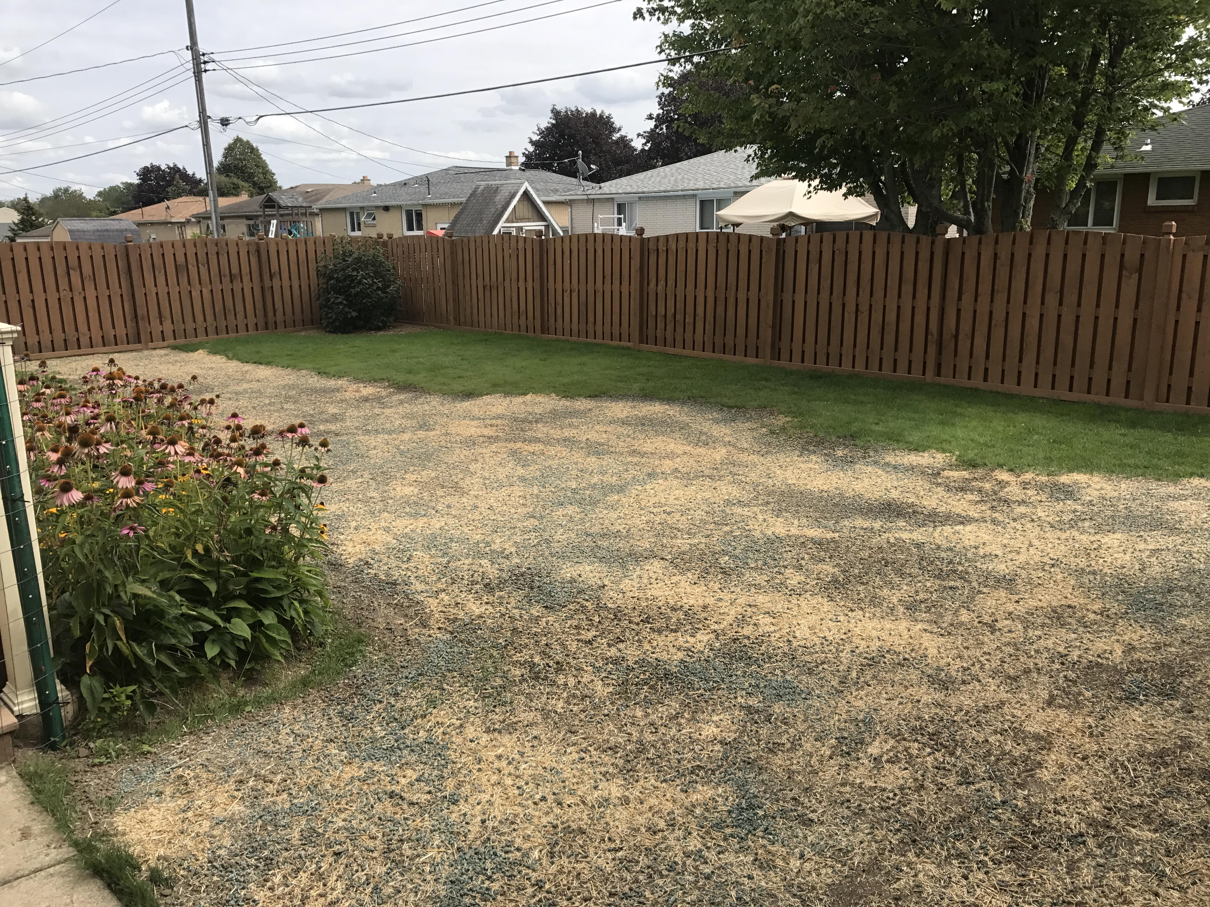 Rear Yard Turf Restoration