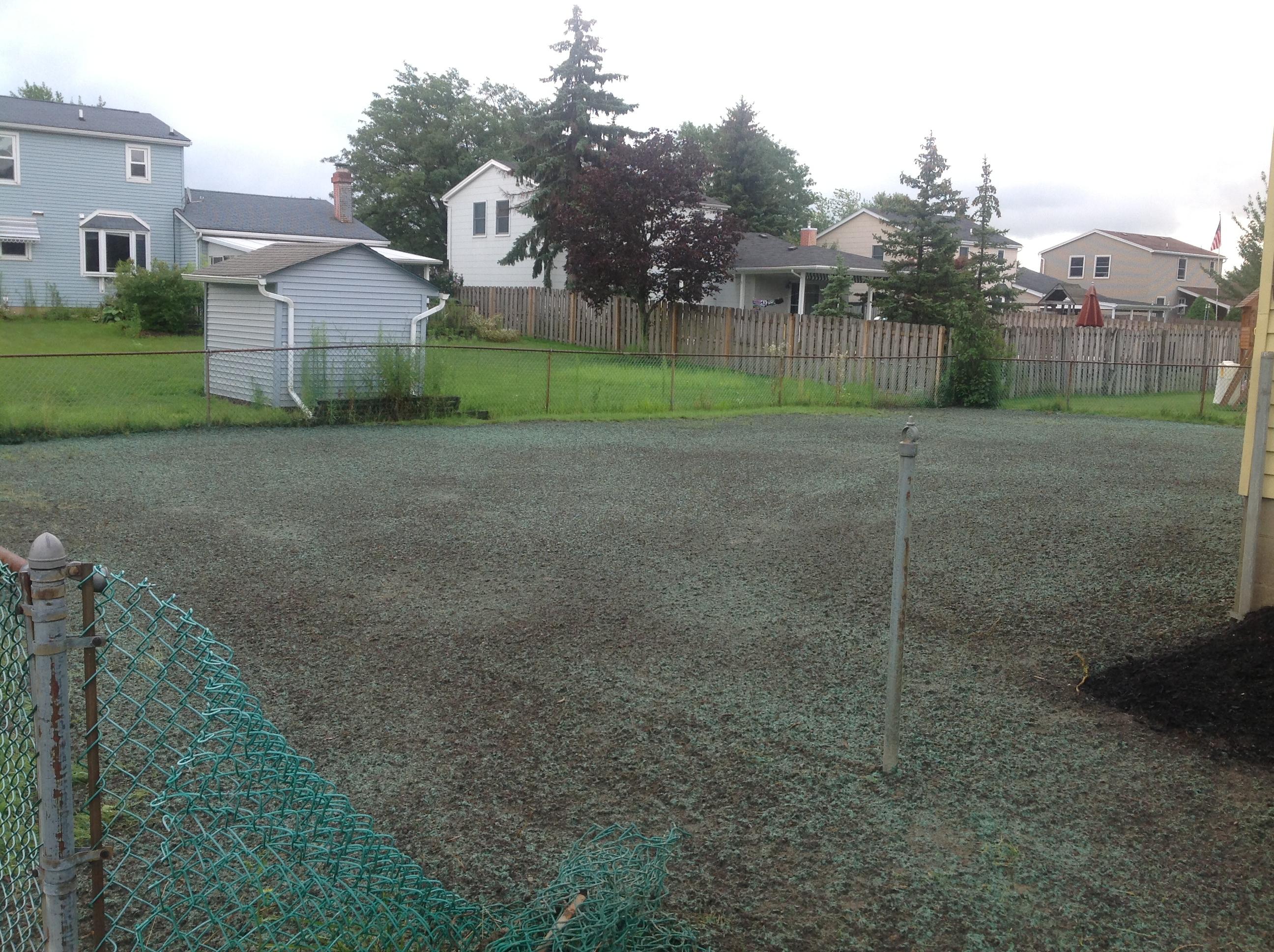 Rear Yard Lawn After