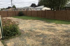 Rear Yard Turf Restoration