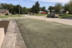 Front Lawn Seeded