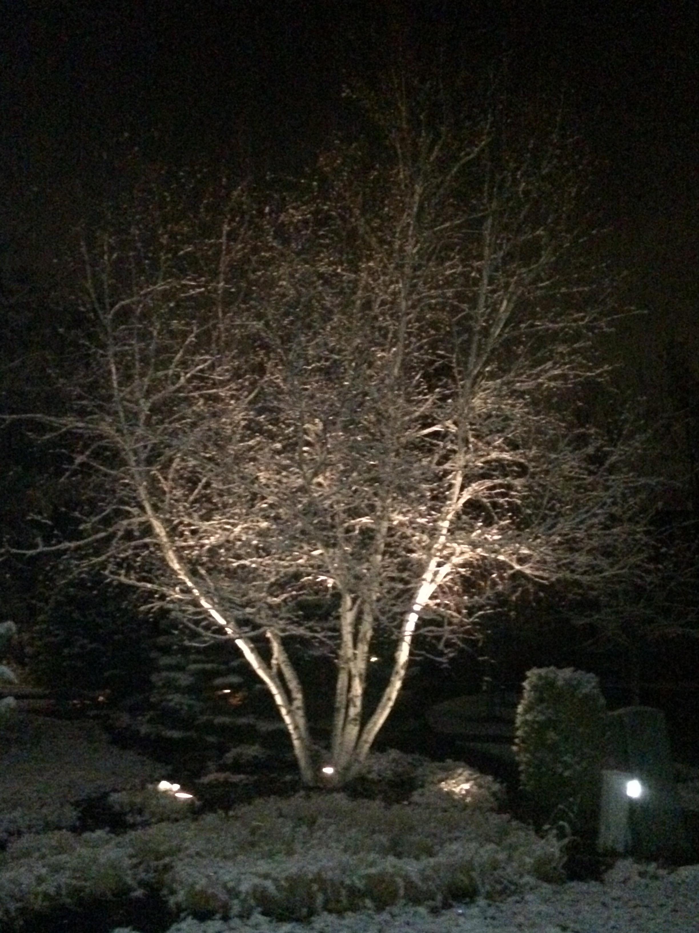 Landcape Lighting