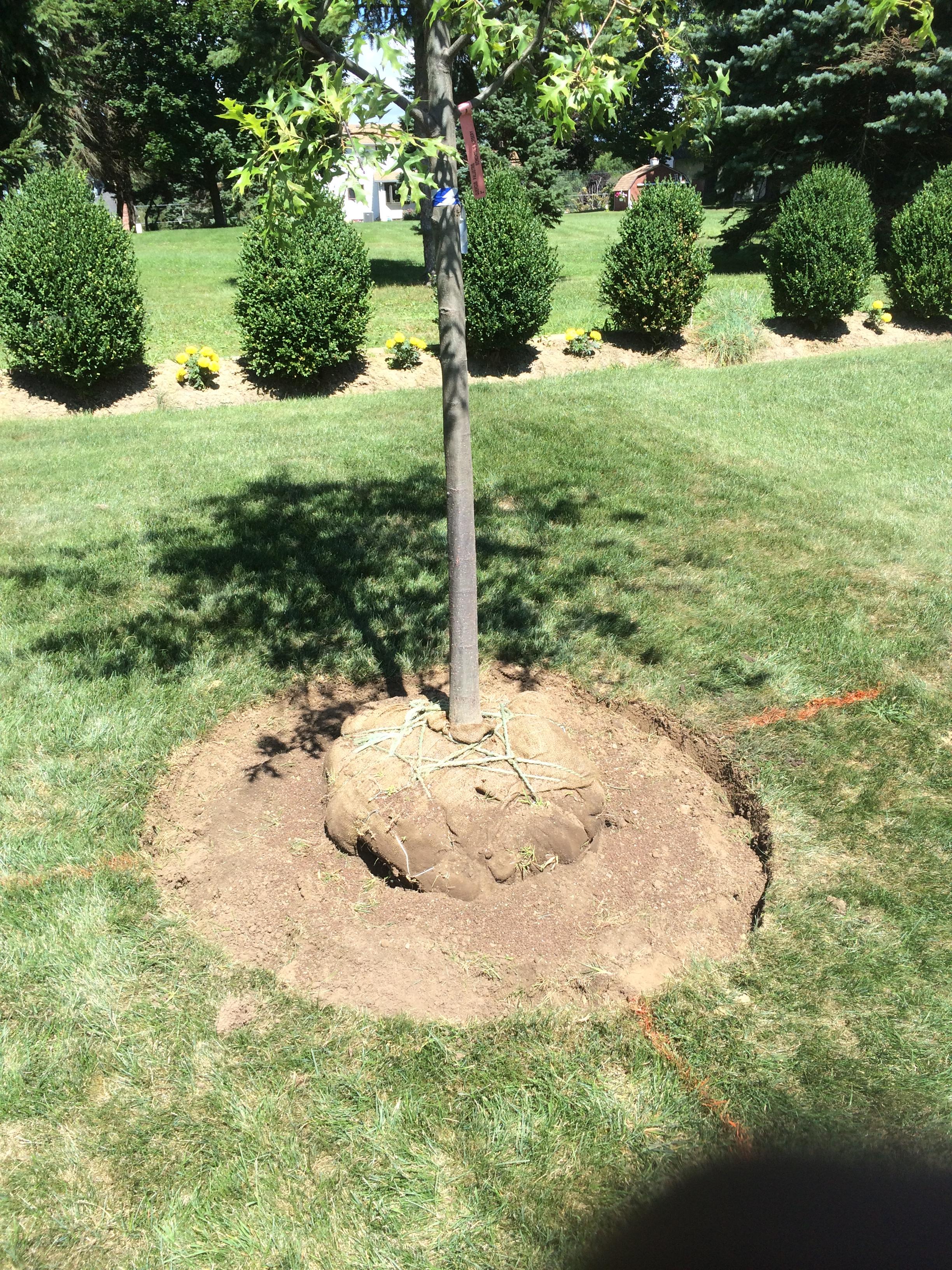 Tree Installation Technique