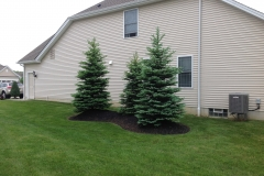 Side Yard Trees