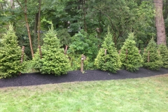 Tree Install Evergreen Berme