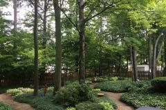 Forest Setting Natural Landscape
