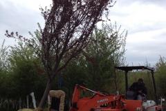 Loading Trees