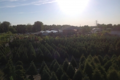Arial Yard Picture